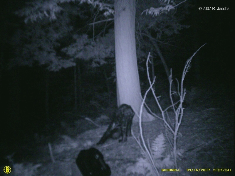 Bigfoot On Trail Cam