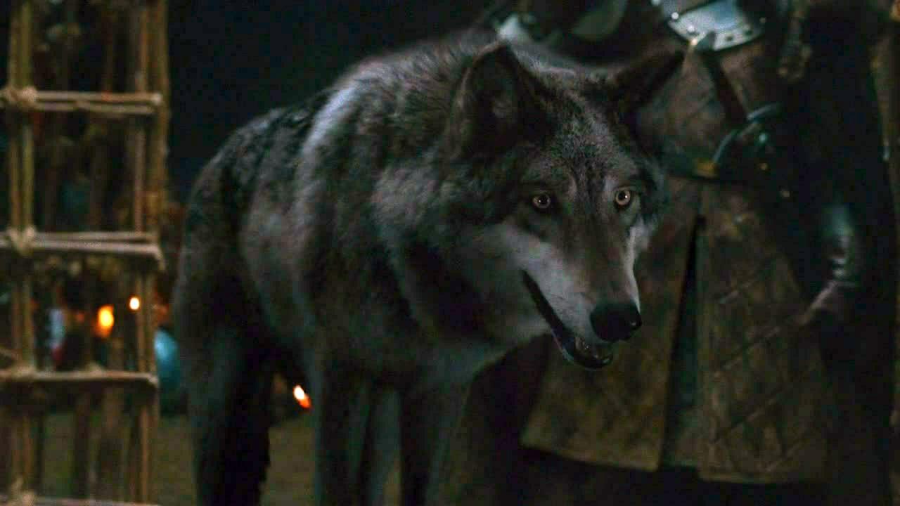 Viento Gris tiene el pelaje de color gris humo y ojos amarillos. [1]